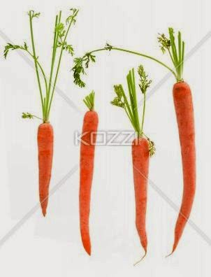 Four Packed Carrots